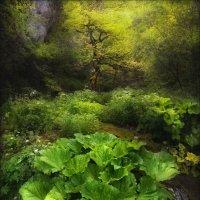Эльфийский лес .. :: Влад Соколовский