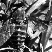 Смерть насекомого :: Екатерина К.