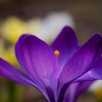 нежная весна :: Юлия