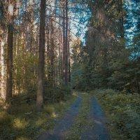лесной дорогой :: Владимир Зеленцов