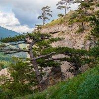 В Крымских горах (2) :: Андрей Козлов