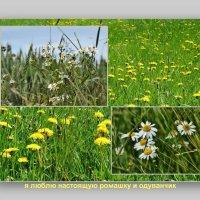 Подарки природы :: Heinz Thorns