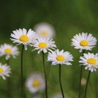 Цветочное и милое настроение.. :: Татьянка *