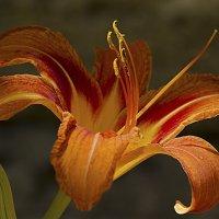 ...и вижу твой образ в каждом цветке... :: Валерий Басыров