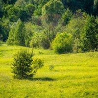 Елочка на поляне1 :: Андрей Гриничев