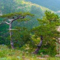 В Крымских горах (5) :: Андрей Козлов