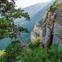 В Крымских горах (4) :: Андрей Козлов