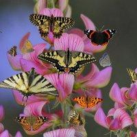 Бабочки :: Юрий Кирьянов