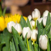 Весна :: Олег Соболев