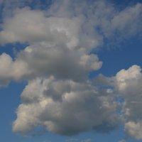 Облако-пудель... :: Владимир Павлов