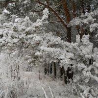 Зимний пейзаж :: Андрей Чиченин