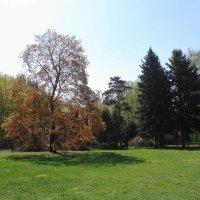 Ботанический сад :: Маргарита Батырева
