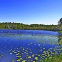 Лесное озеро... :: Vladimir Semenchukov