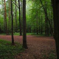 прогулка по лесу :: Nara Nakhshkarian