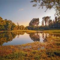 Летний пейзаж :: Александр Шишин