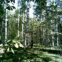 природа :: Владимир