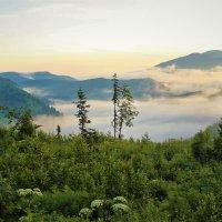 Бродят в долине туманы :: Сергей Чиняев