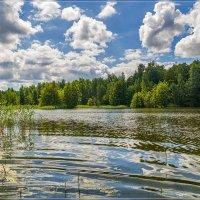 Середина июня 3 :: Андрей Дворников