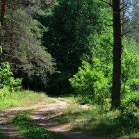 Лес в июне :: Милешкин Владимир Алексеевич