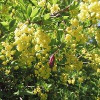 И цветы и плоды :: Galaelina ***
