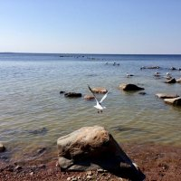Чайка на Финском заливе :: Ирина Коноплёва