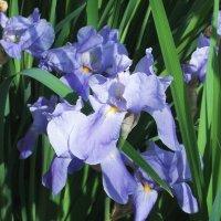 Цветы у дома :: Фотогруппа Весна-Вера,Саша,Натан