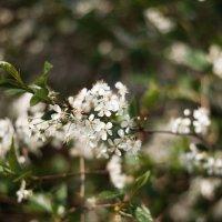 Весенний цвет :: Таня Турмалин