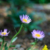 цветы :: Руслан А