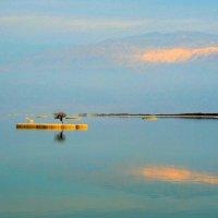 Дерево жизни на мертвом море :: Гала