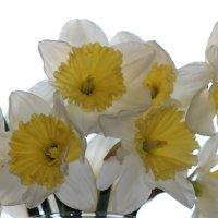 первые цветы. :: веселов михаил