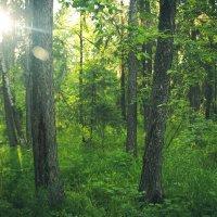 В лесу :: Вадим Басов