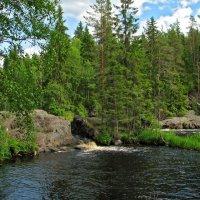 Карельский лес :: максим лыков