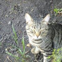 Мой кот-огородник)))) :: Алексей Кузнецов