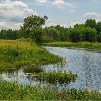 Жара, июнь 6 ...... :: Андрей Дворников