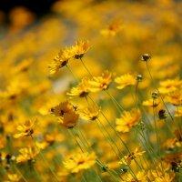 Мандаринки превратились в цветы... :: юрий