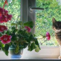Моя кошка на окошке... :: Галина Ильясова