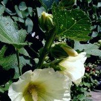 Цветы лета :: Maryana Petrova