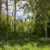 У опушки леса :: Нина Кутина