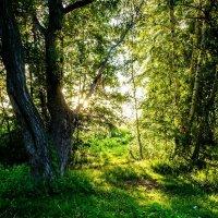 Солнце садится :: Валерьян