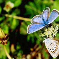 бабочки :: Ольга Мутовина