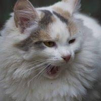 Белая кошечка :: Ольга Винницкая (Olenka)