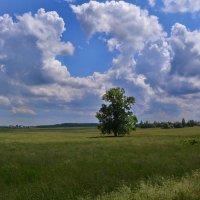 Пейзаж в Гродненской области. Беларусь. :: Александр Сапунов