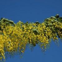 Жёлтые цветочки :: Александр Деревяшкин