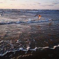 Море :: Инга Энгель