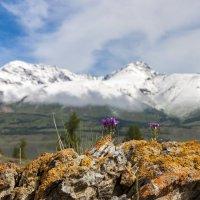 В горах Алтая :: Александр Скалозубов