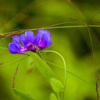 Лесной цветок . :: Евгений Ананевский