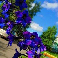 summer time :: Елена Горбатова