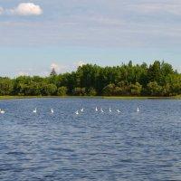 Лебеди на озере :: Вера Андреева
