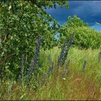 Природа в июне :: lady v.ekaterina