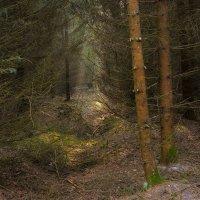 В лесу на Куршской косе :: Виталий Латышонок